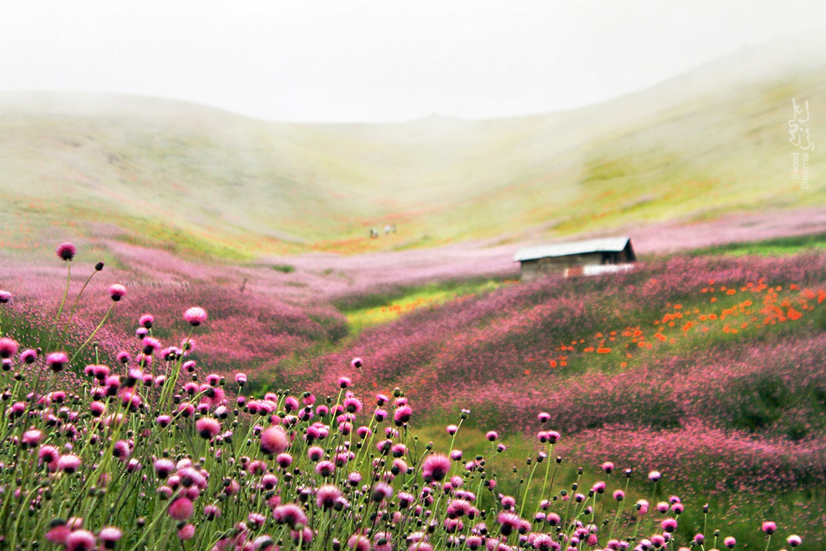 Flower, Iran, Khalkhal, Asalem, Fog, Landscape