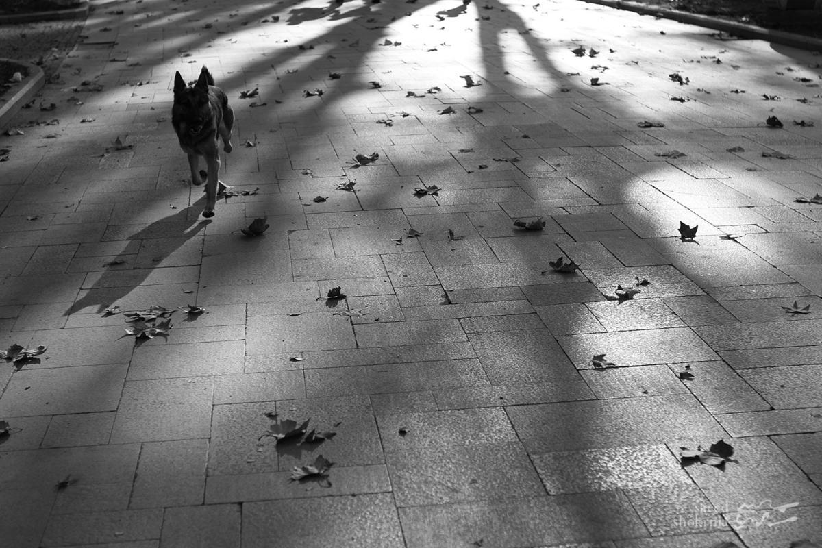 Photography, sunset, Dog, Leaf