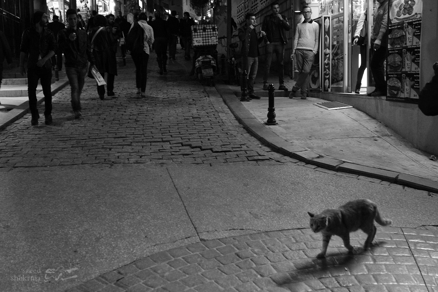 Sea, Photography, Istanbul, Street, Photo, Night, Cat