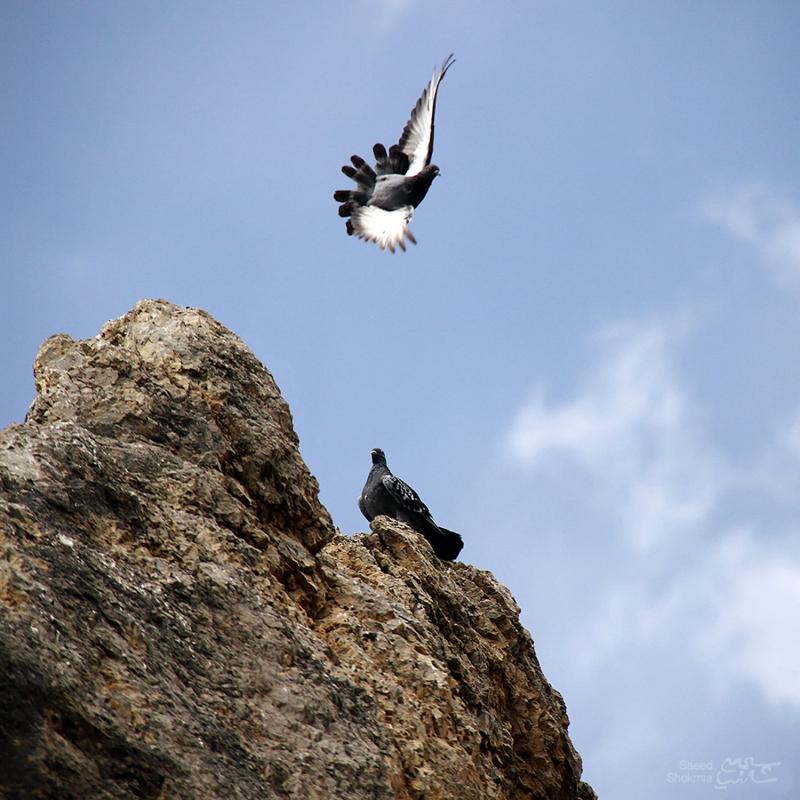Rock, Minimal Photography, Photo, Sky, Birds
