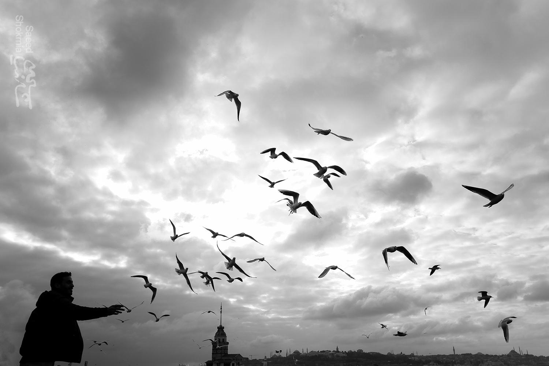 Photo, Sea, Istanbul, Qiz Qalas, Birds, Sky